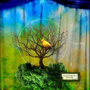 """Collage of a bird sitting in a tree and a green, blue, and yellow curtain. It reads, """"Start here."""""""