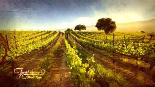 Photograph of a vineyard stylized to look like a watercolor painting. The Furthermore logo is in the lower left corner.